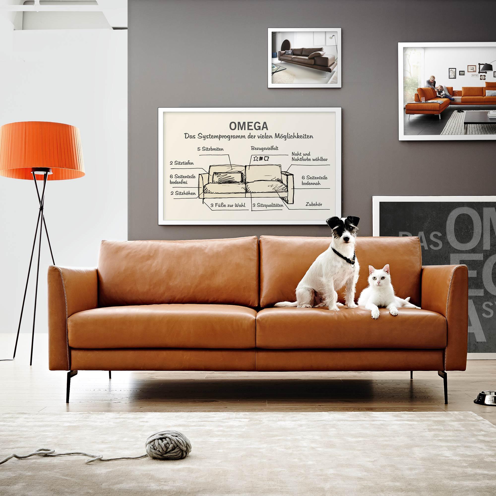 Wunderbar Koinor Möbel Referenz Von Omega Sofa Orange